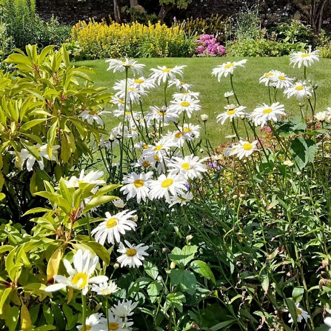 Scottish_garden_flower_bed_in_early_August