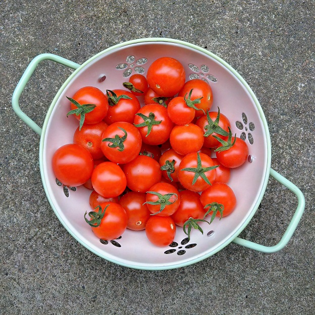 Freshly_picked_homegrown_tomatoes