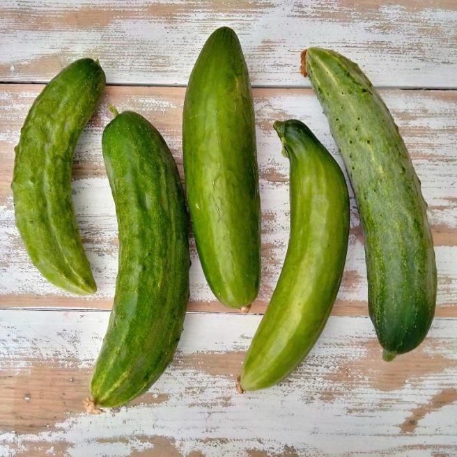 Cucumber_harvest