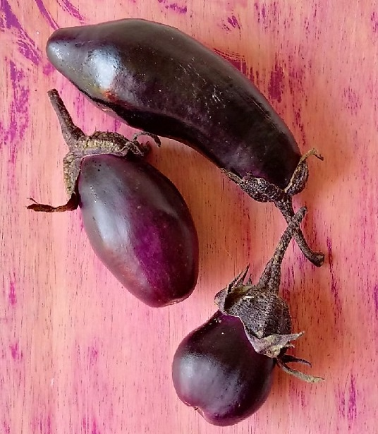 Fresh_aubergine_(eggplant)_fruit
