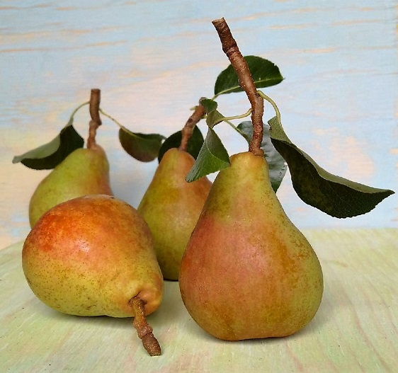 Still_life_homegrown_Comice_pears