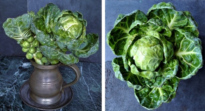 Freshly_picked_homegrown_Brussels_sprouts_and_tops