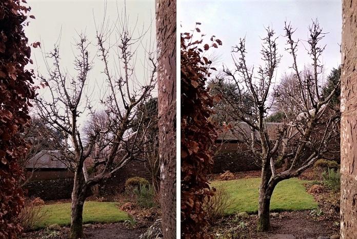 Pruning_an_apple_tree_in_December