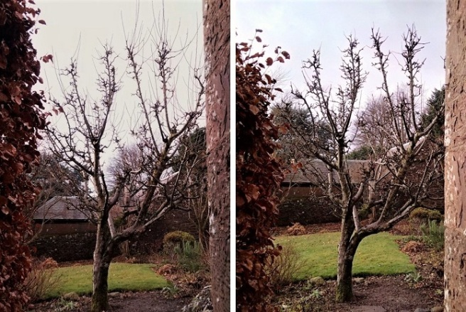 Pruning_an_apple_tree_in_December