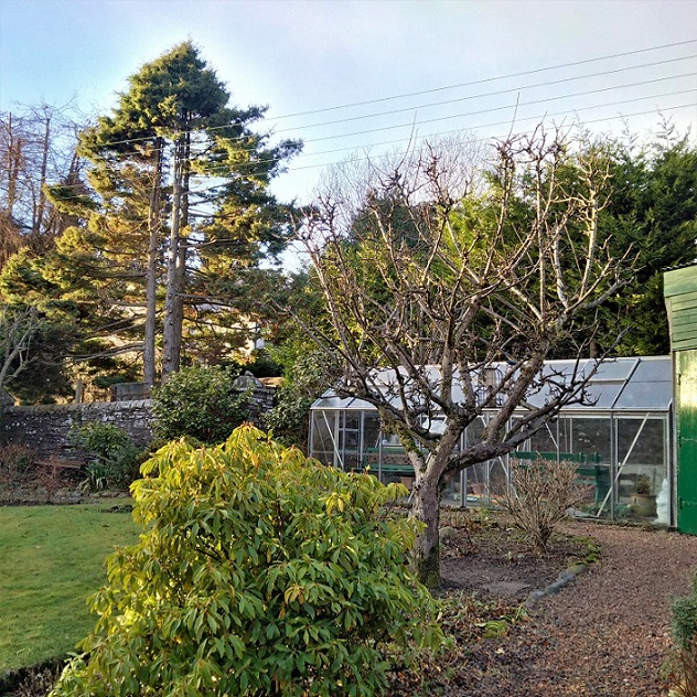 January_1st_2017_Perthshire_garden