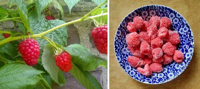 Homegrown_raspberries_on_the_branch_and_frozen