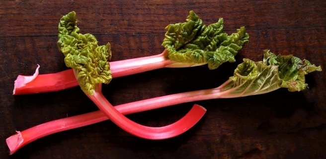 3_stems_fresh_spring_rhubarb