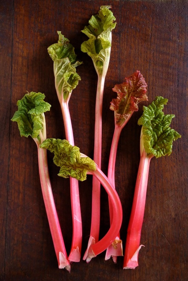 Homegrown_forced_spring_rhubarb