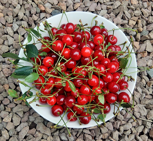 Bowl_of_freshly_picked_Morello_cherries