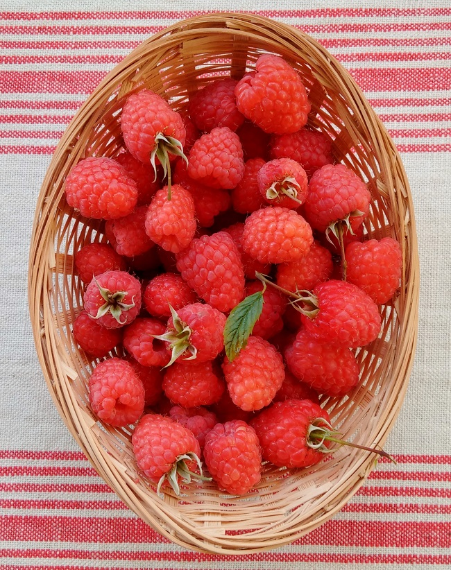 Basket_of_freshly_picked_homegrown_fresh_raspberries