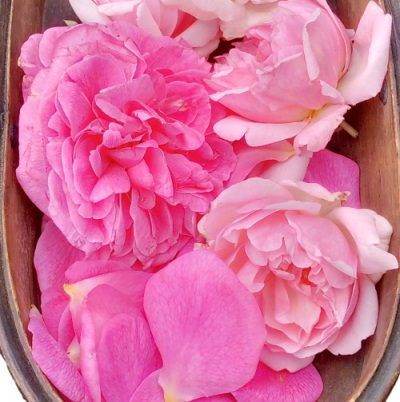 Freagrant_roses_and_petals