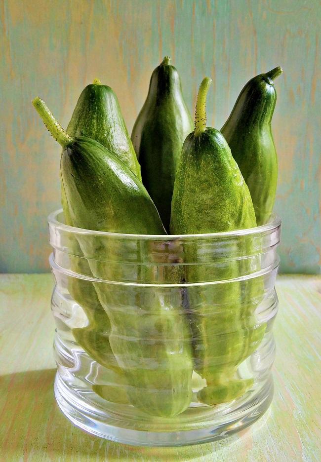 Jar_of_freshly_picked_homegrown_cucumbers