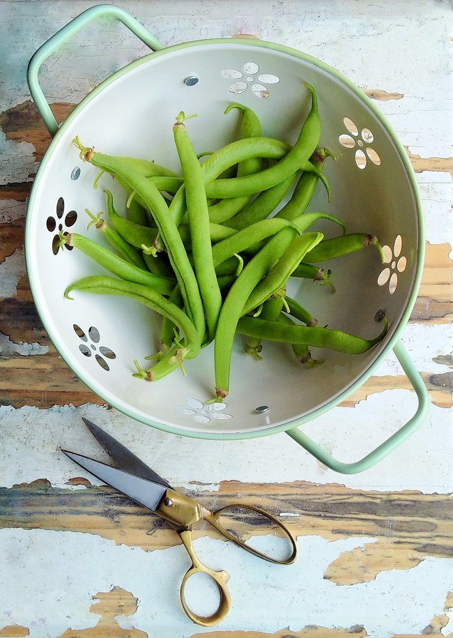 Freshly_picked_homegrown_French_beans