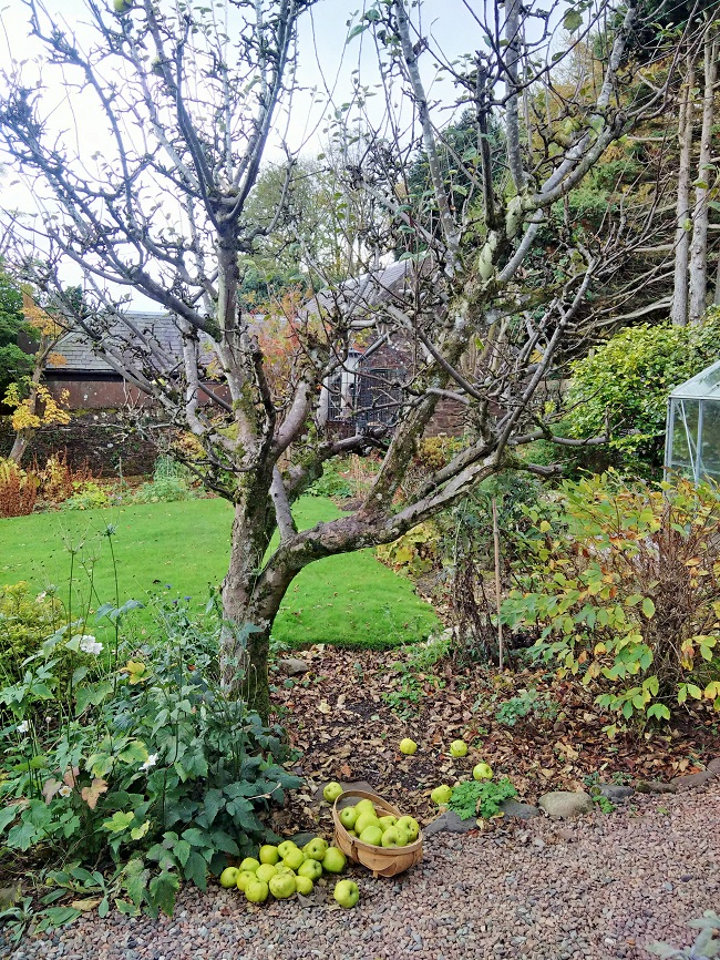 Autumnal_garden_collecting_windfall_apples