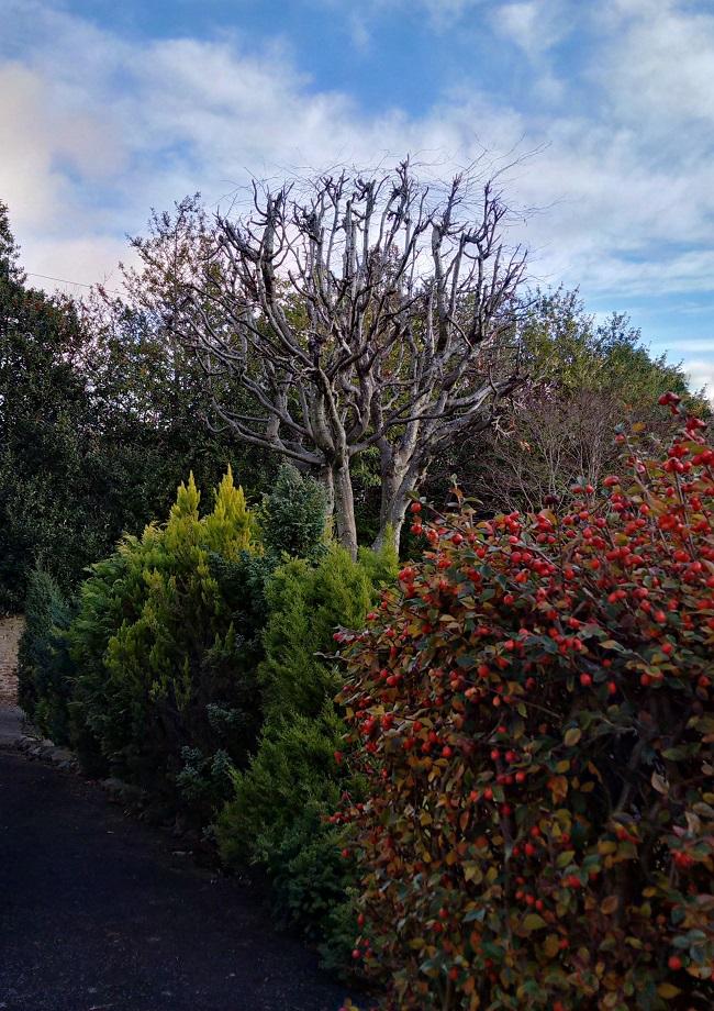 A_Scottish_garden_in_December_under_a_blue_sky