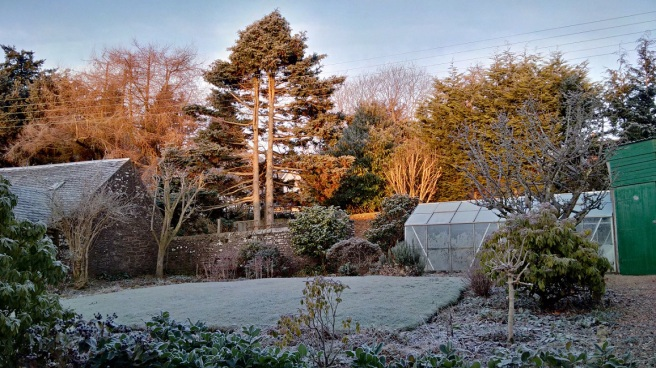Heavy_garden_frost_in_Scotland_in_early_January