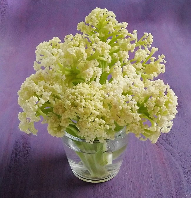 Vase_of_sweet_sprouting_cauliflower_stems