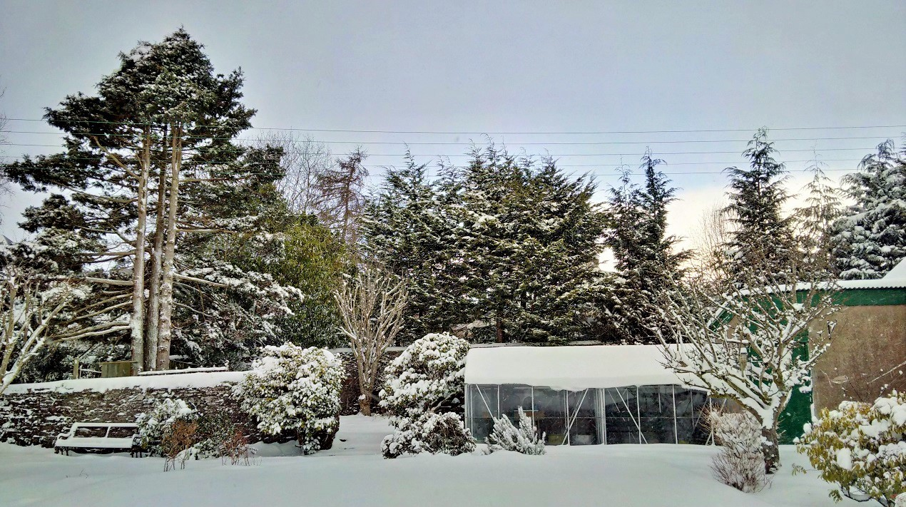 Early_March_snowfall_in_a_Scottish_garden