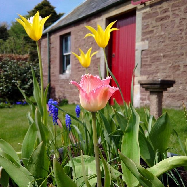 Wheelbarrow_of_spring_flowers