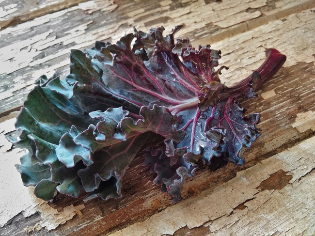 Freshly_pickedsmall_sea_kale_leaf