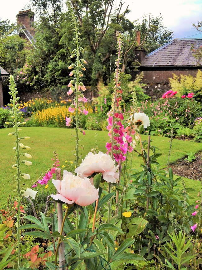 Scottish_garden_border_bed_with_peonies_and_foxgloves