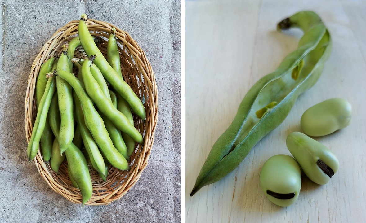 Fresh_broad_beans_in_the_pod_and_shelled