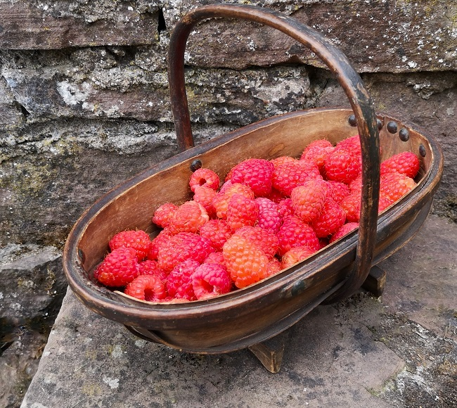 Wooden_trug_filled_with_Glen_Ample_raspberries