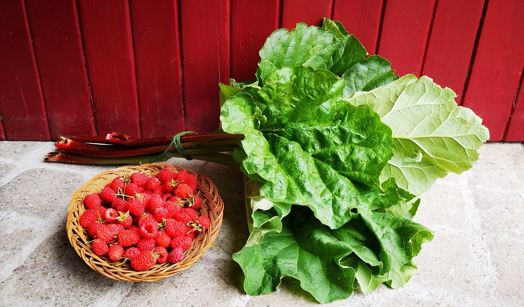 Oval_basket_of_summer_raspberries_and_a_bunch_of_rhubarb_stems