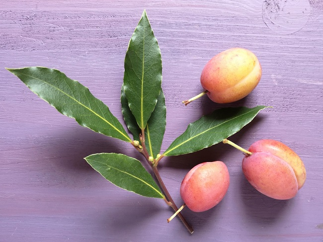 Sprig_of_fresh_bay_leaves_with_3_Victoria_plums
