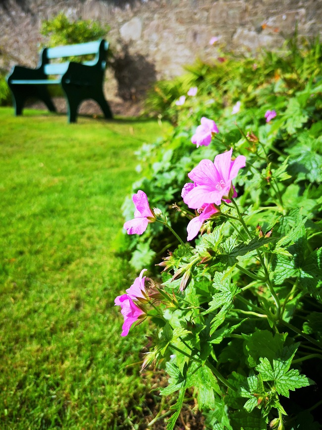 Sunny_border_with_late_flowering_meadow_cranesbill