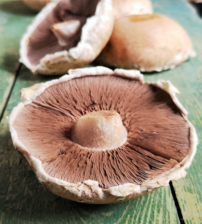Portobello_mushrooms