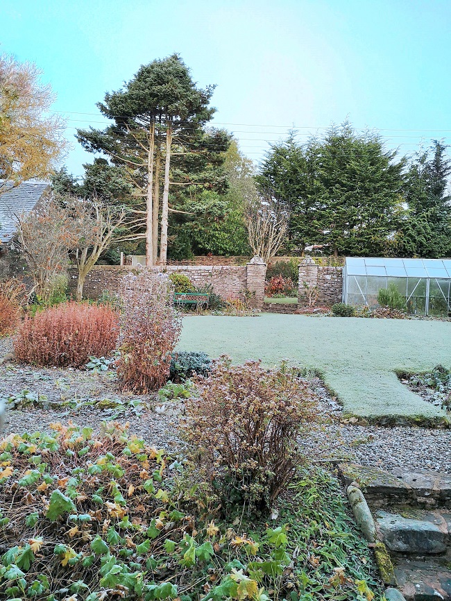 Scottish_garden_with_morning_frost