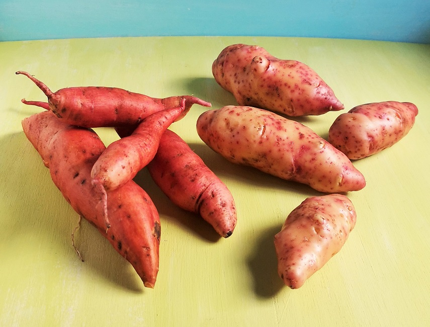 Freshly_scrubbed_home-grown_sweet_potato_and_pink_fir_potatoes