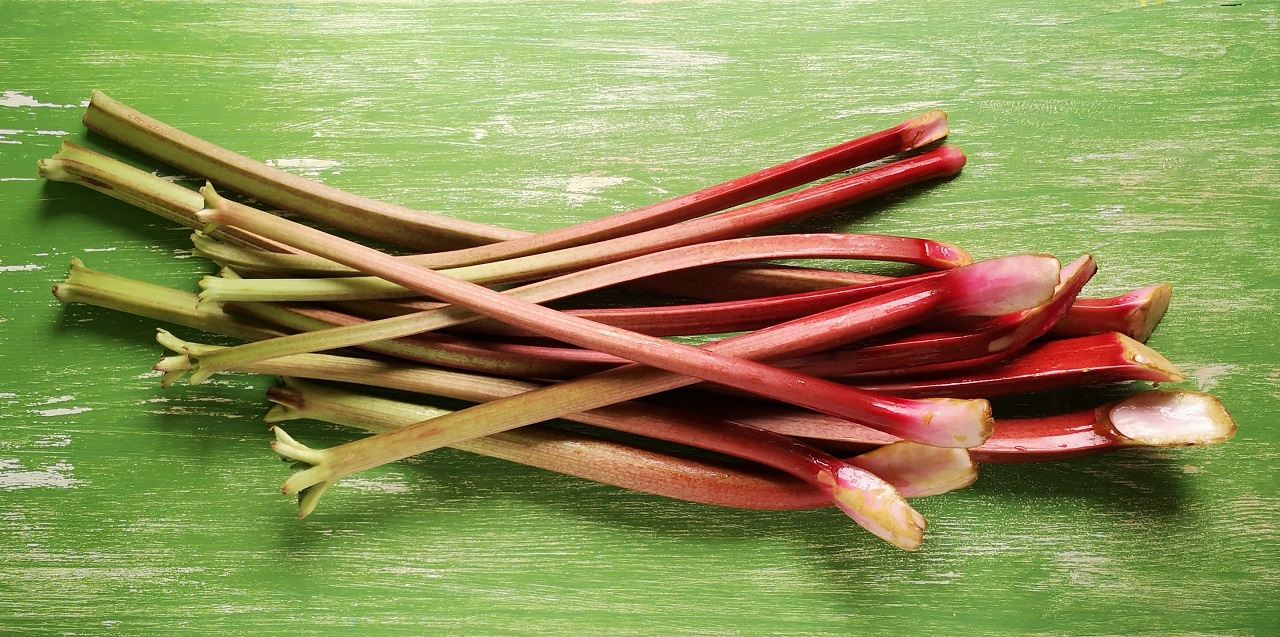 A_bundle_of_fresh_spring_rhubarb_stalks