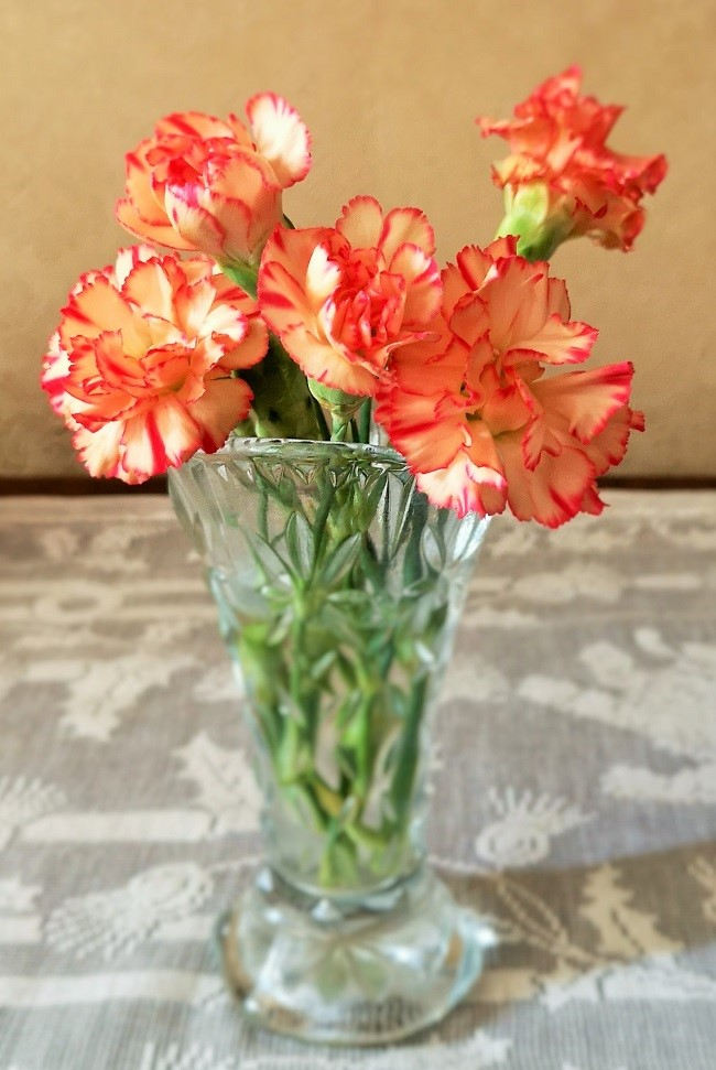 Small_peach_and_red_carnation_flowers