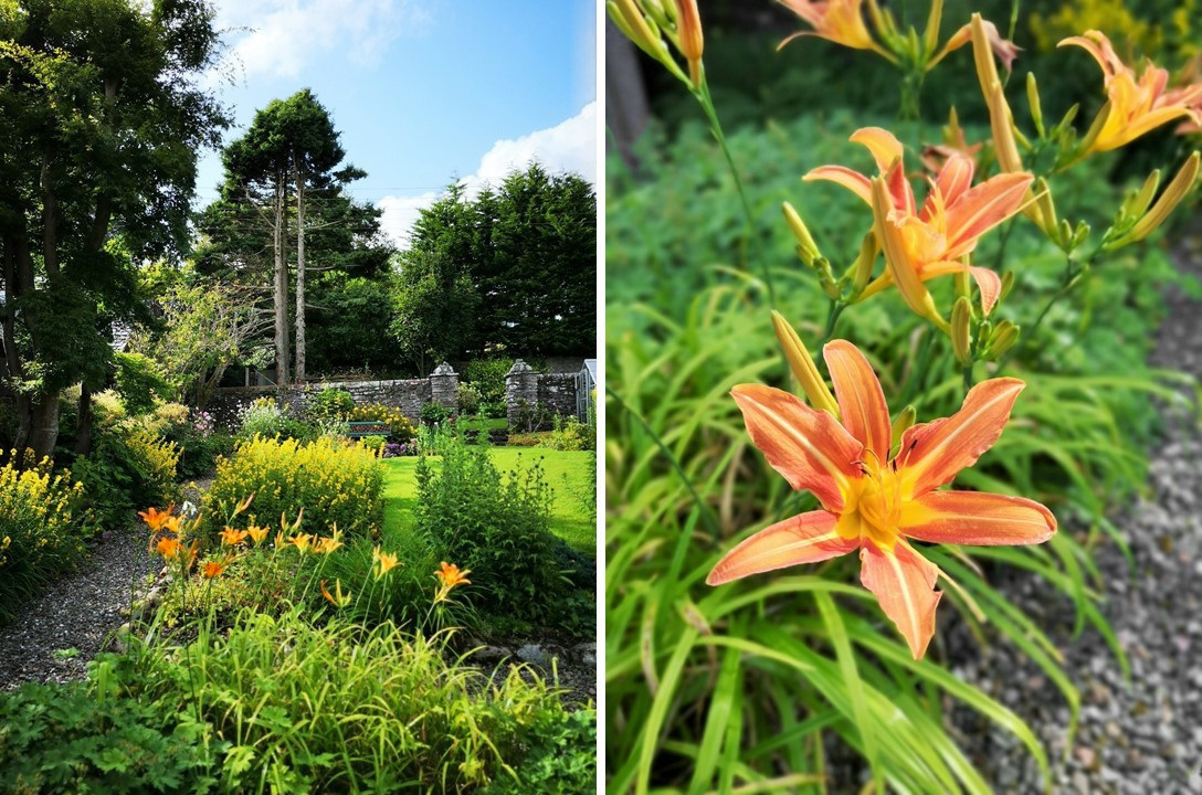 End_of_July_in_a_Scottish_garden_with_orange_lilies