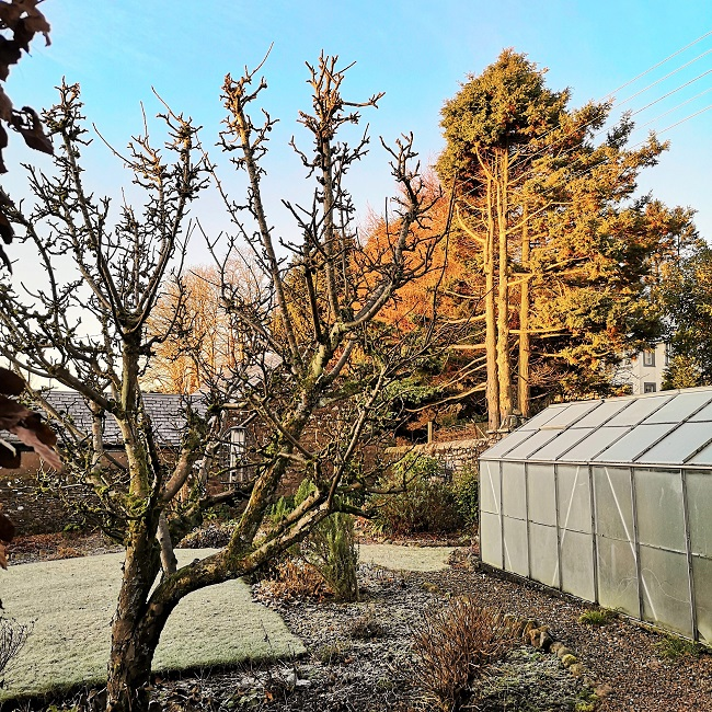Frosty_morning_in_Scottish_back_garden_December_31st
