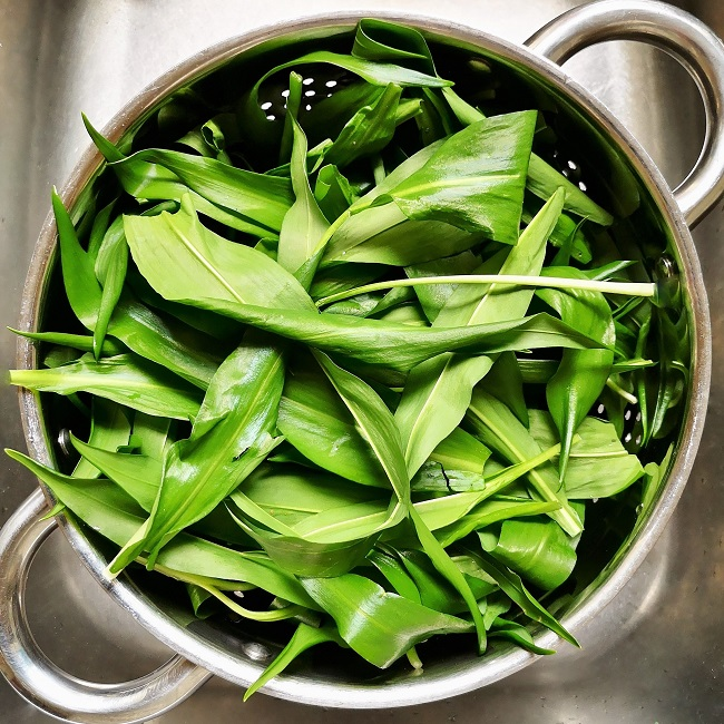 Wild_garlic_leaves_in_a_stainless_steel_colander