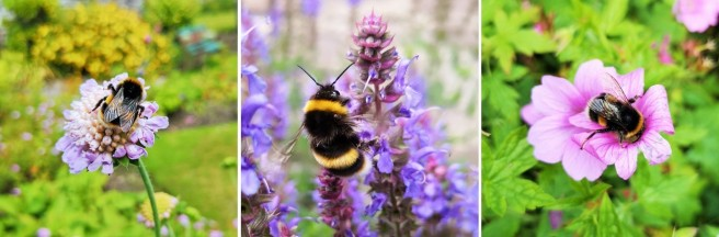 Garden_flowers_and_bees