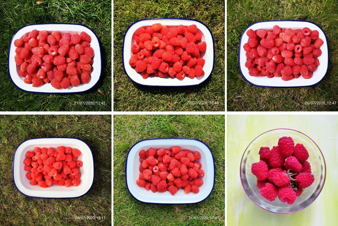 Second_half_of_July_2020_home-grown_raspberries