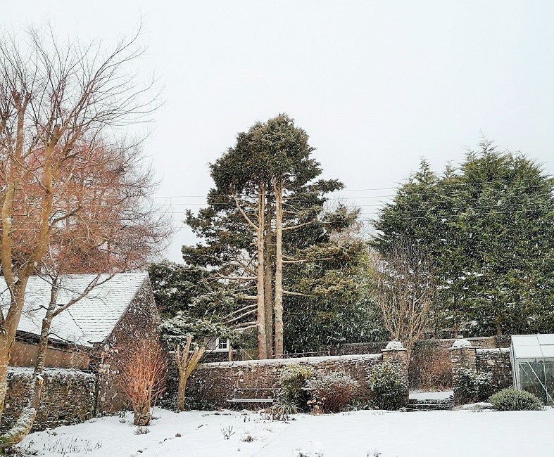 Scottish_garden_in_the_snow_January_2021